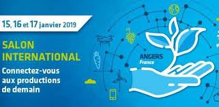 Sival à Anger du 15 au 17 janvier 2019